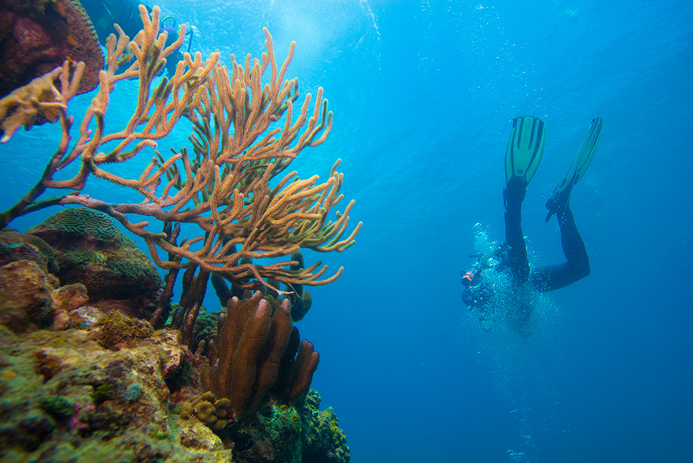 grenada diving in the Caribbean Sea is amazing with the coral and underwater sculptures
